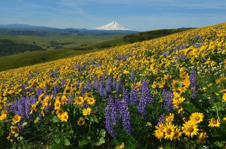 1859_web_spring-wildflower-hikes_nina-pollock