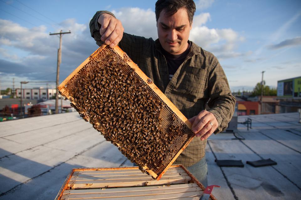 bee local, portland