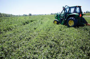 whitehead farms, mint