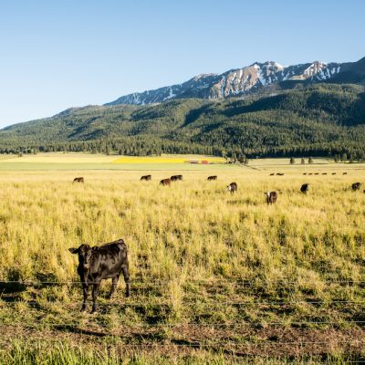 1859 Magazine, Joseph, Oregon, Trip Planner, Cattle property along road, scenic