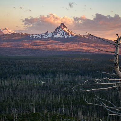 Pretty in Pink  —Location: Deschutes National Forest