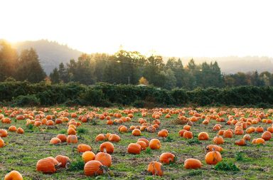 The Pumpkin Patch, Sauvie's Island, 2015. Photograph by Cameron Zegers.