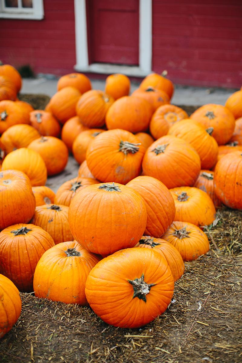 The Pumpkin Patch, Sauvie Island - Home Facebook