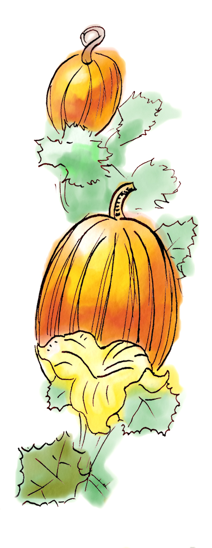 pumpkinsvertical2