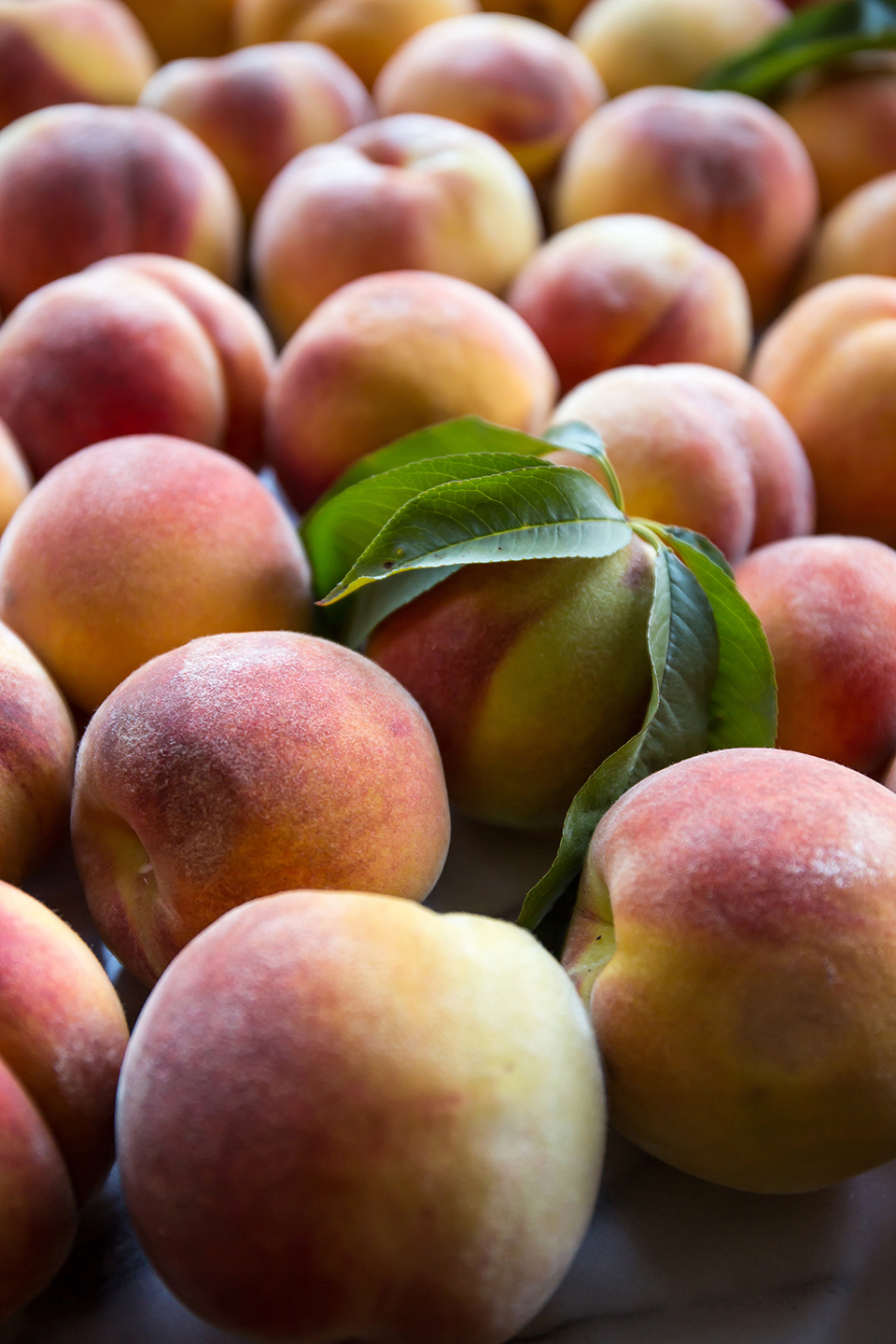 August 2016, summer peaches from Jossy Farm, Portland, OR.