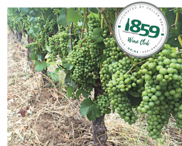 Crowley Wines uses grapes that are certified organic.
