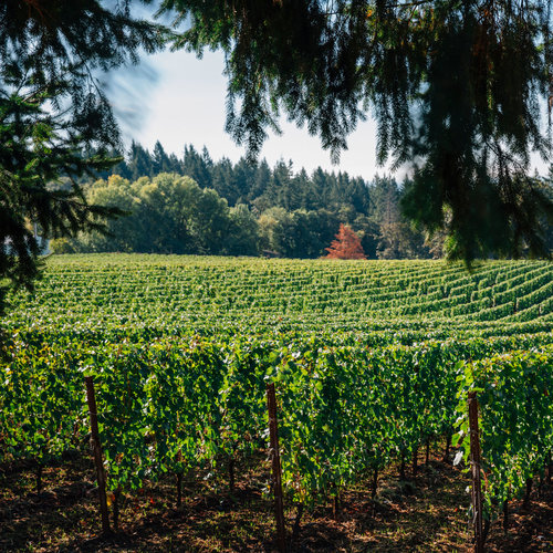 Heritage and History: Wine Dinner