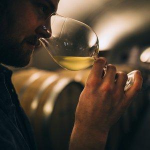 Saturday Seminar: Wine 101