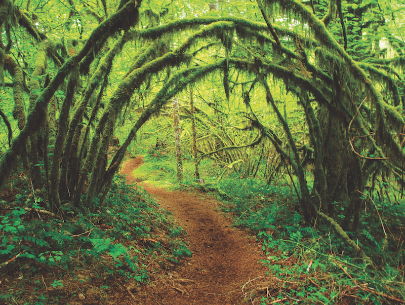 The Best Oregon Coast Hikes You\'ve Never Heard Of - 1859 Oregon\'s ...