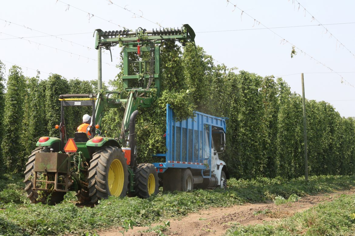 hop at Rogue Farms
